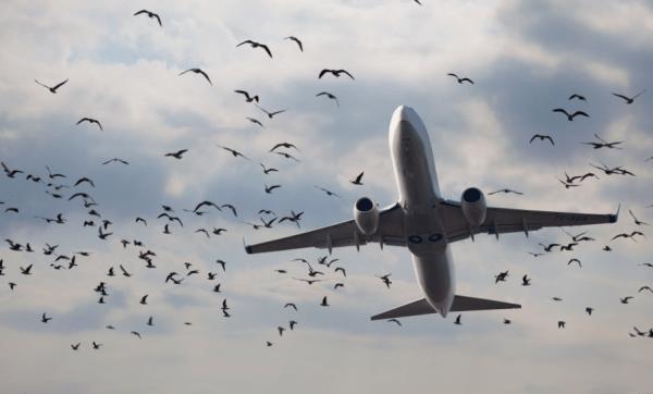 приметы и суеверия в авиации