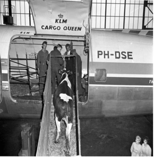 95 лет истории авиакомпании KLM в ретро фотографиях 12