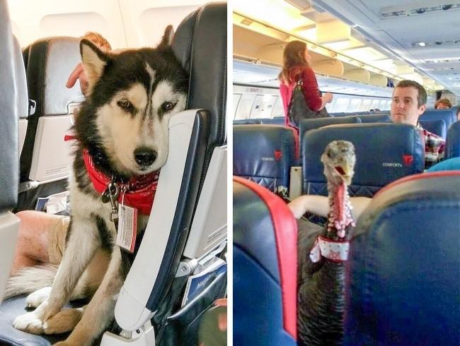 Топ-хитростей, которые пригодятся пассажирам-новичкам в аэропортах